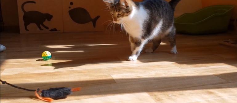 Kociarnia Krosno OTOZ Animals – Film uczennic klasy II b